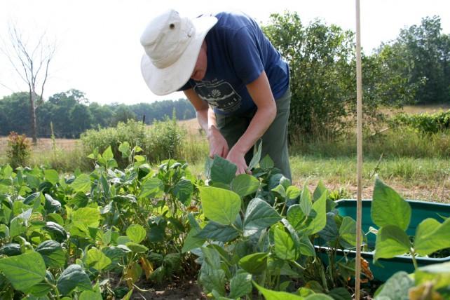 Regenwürmer leisten einen tollen Beitrag für eine gute Ernte