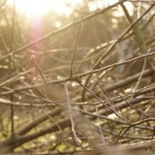 Detail-Foto eines Totholzhaufens aus jungen Ästen