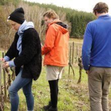 Foto von jungen Menschen beim Weinschnitt