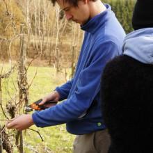 Foto eines jungen Mannes beim Schneiden von Wein
