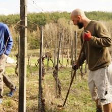 Foto von Michael beim zusammenrechen im Weingarten
