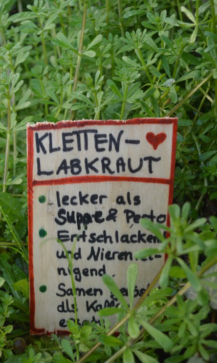 Wildkräuter im Vorgarten, hier: Klettenlabkraut mit Beschilderung