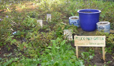 Wildkräuter im Pflück-mich-Garten