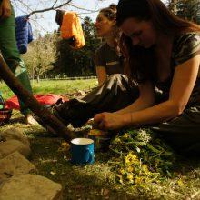 Frau zupft Löwenzahnblüten in ein einen Topf