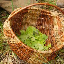 Wildpflanzen in einem Sammelkorb