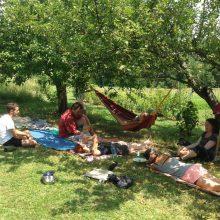 Foto von Menschen bei der Pause im Schatten von Bäumen