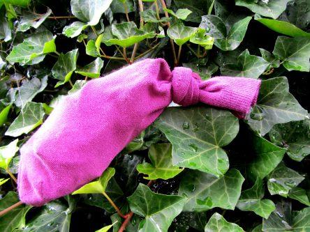 Efeu in der Socke