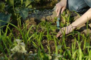 Tiefkulturbeete brauchen viel Kompost
