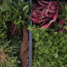 Foto von geernteten jungen Salaten und Radieschen