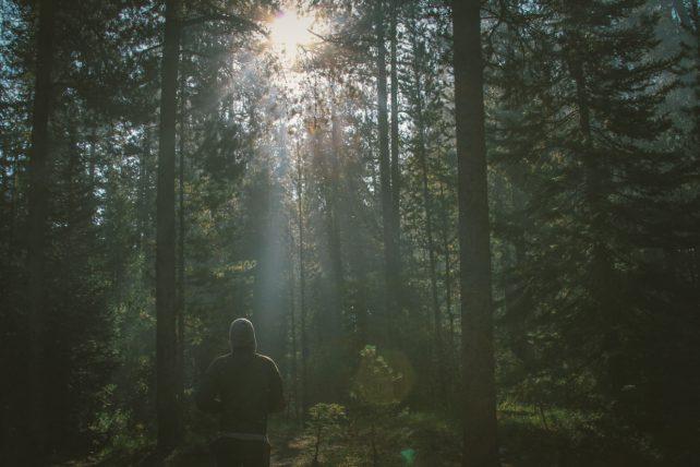 Foto einer Person mit Kaputzenpulli beim Sport im Wald